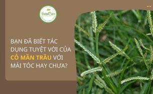 Hướng dẫn gội đầu bằng cỏ mần trầu – cho tóc hết gàu, hết rụng