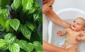 Mẹ nên tắm gì cho trẻ để lông măng nhanh rụng?
